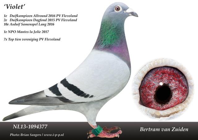 NL13 1094377 Opmaak